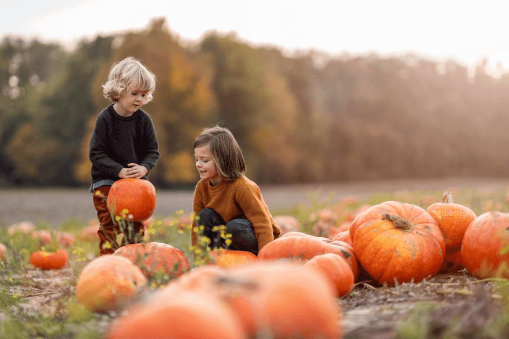 Denver pumpkin patches